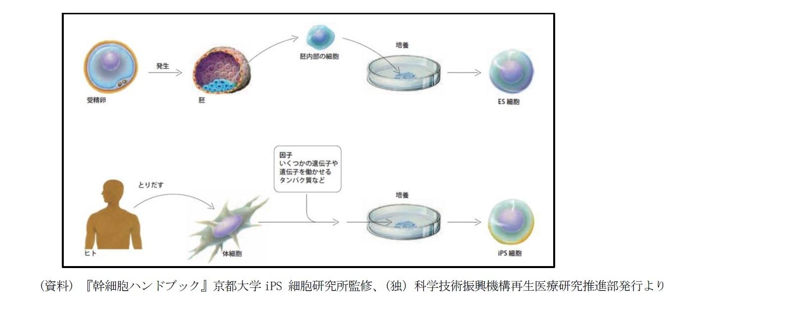 ES細胞とiPS細胞