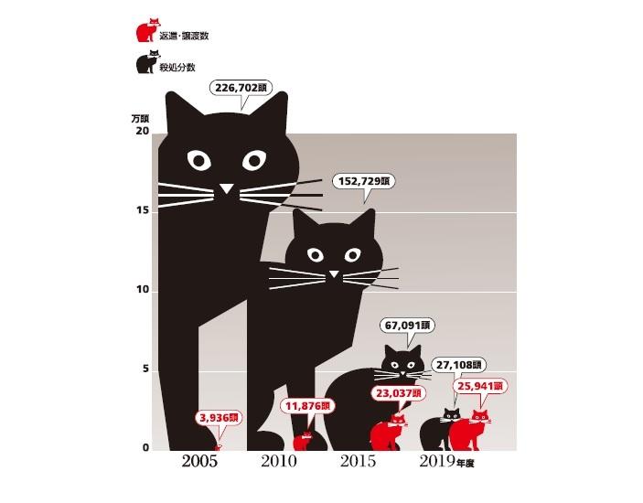 Infocalendar -引取り猫の処分の状況[9月20日~26日は動物愛護週間]